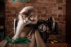 De pluizige kat speelt en steelt groene metende band Oude naaimachine stock afbeeldingen