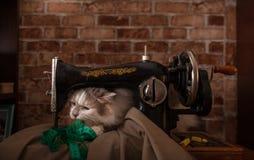 De pluizige kat speelt en steelt groene metende band Oude naaimachine stock foto