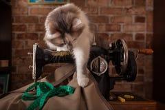 De pluizige kat speelt en steelt groene metende band Oude naaimachine royalty-vrije stock afbeelding