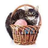 De pluizige kat in a wattled mand met wollen ballen. Stock Foto