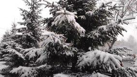 De pluizige sneeuw valt langzaam op de takken van sparren Langzame Motie stock video