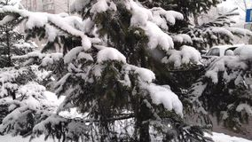 De pluizige sneeuw valt langzaam op de takken van sparren Langzame Motie stock videobeelden