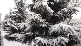 De pluizige sneeuw valt langzaam op de takken van sparren Langzame Motie stock footage