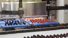 De plukkerslijn voor chocolade draagt, koekjes, suikergoed stock video