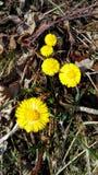 ¾ de PodbeÄ de las flores Imagenes de archivo