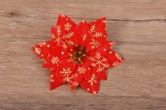 De poinsettia van de Kerstmisbloem Royalty-vrije Stock Fotografie