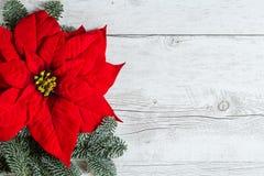 De Poinsettia van de Kerstmisbloem stock afbeelding