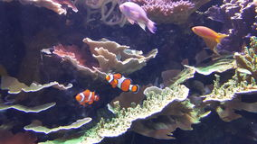 De poisson ici de poisson Image libre de droits