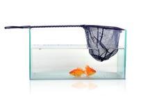 or de poissons Image libre de droits