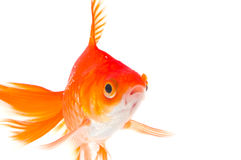 or de poissons Photographie stock