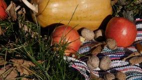 De pompoen, de appelen en de okkernoten liggen in het gras stock footage