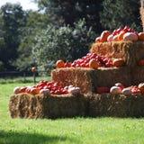 De pompoen, de pompoenen en de pompoen van de herfst Royalty-vrije Stock Afbeelding