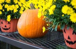 De pompoen en de potten van Halloween Stock Fotografie