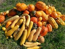 de pompoen, de herfst is hier Stock Afbeeldingen