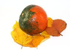 De Pompoen van de herfst geïsoleerd Stock Foto