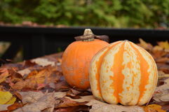 De pompoenen en de herfst doorbladeren in Canada Stock Foto's