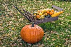 De Pompoenen en de Pompoenen van de herfst Stock Foto's