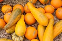 Geplukte pompoenen (moschata Cucurbita) Stock Afbeelding