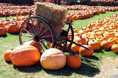 De pompoenen van de herfst Stock Foto