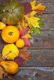 De pompoenen van de herfst Stock Fotografie