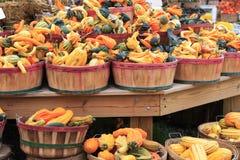 De Pompoenen van de herfst stock foto's