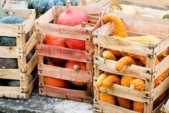 De pompoenen van de herfst in dozen Royalty-vrije Stock Afbeeldingen