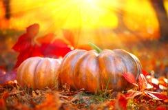 De pompoenen van de herfsthalloween Oranje pompoenen over aardachtergrond stock fotografie