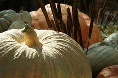De pompoenen van Halloween Stock Fotografie