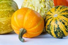 De pompoenen van Halloween Verschillende grootte, soorten en kleuren Geel, oranje, groen Stock Afbeeldingen
