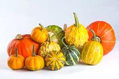 De pompoenen van Halloween Verschillende grootte, soorten en kleuren Geel, oranje, groen en wit Stock Afbeelding