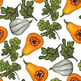 De pompoenen van de de herfstoogst Vectorillustratie op een witte die achtergrond in een realistische stijl wordt uitgevoerd vector illustratie