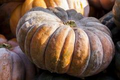 De pompoenpompoenen van Muscadede de Provence cucurbita van de herfst Royalty-vrije Stock Foto