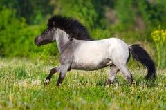 De poney loopt snel royalty-vrije stock fotografie