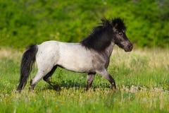De poney loopt snel stock afbeeldingen