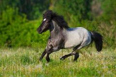 De poney loopt snel royalty-vrije stock afbeeldingen