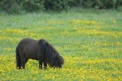 De Poney van de lente stock afbeeldingen