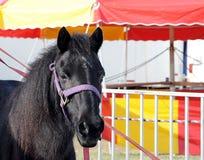 De Poney van het circus stock foto