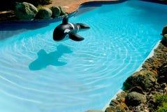 De pool van de binnenplaats stock afbeeldingen