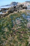 De pool van het getijde: zeeanemonen stock afbeelding