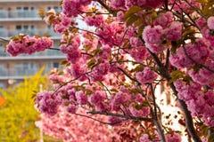 De poort van het heiligdom is Japan Royalty-vrije Stock Foto