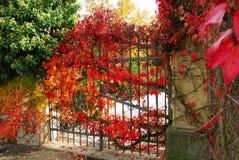 De poort van het ijzer en rode bladeren Royalty-vrije Stock Afbeeldingen