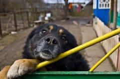 De poorten van de hond Royalty-vrije Stock Foto's