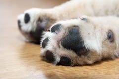 De poot van de hond royalty-vrije stock afbeeldingen