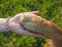 De poot van de hond Stock Foto