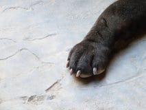 De poot van de hond Stock Afbeeldingen