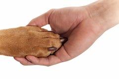 De poot van de hond in menselijke hand Stock Afbeeldingen