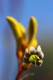 De Poot van de kangoeroe Royalty-vrije Stock Afbeeldingen
