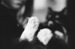 De poot van de kat Stock Foto's