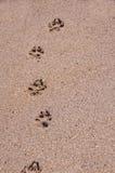 De pootaf:drukken van de hond in het zand. royalty-vrije stock afbeeldingen
