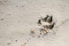 De pootaf:drukken van de hond in zand Stock Afbeeldingen